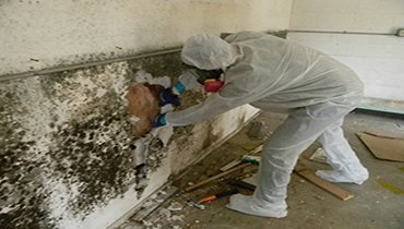 mold removal process by men