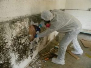 mold removal by men